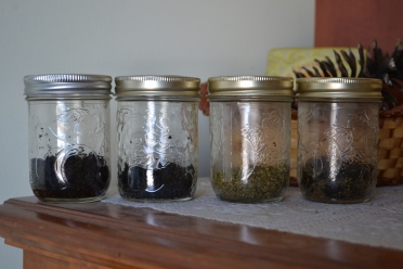 From left to right: two coffee starters, half and half yerba mate and coffee and one yerba mate starter