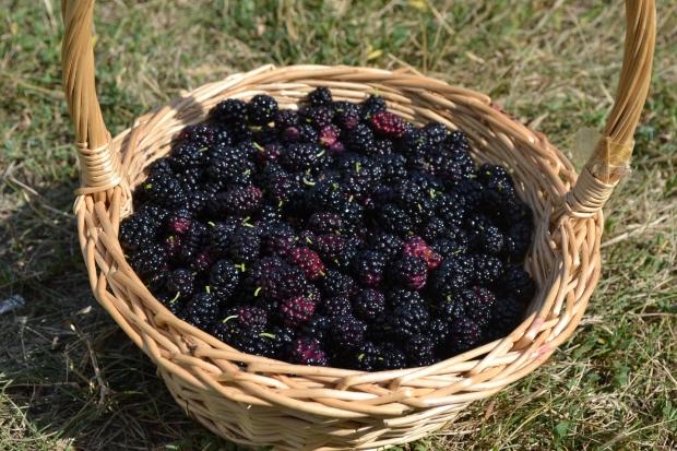 mulberrybasket