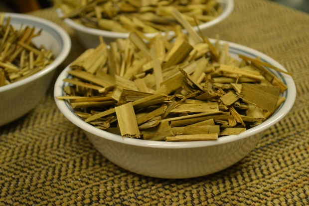 A bowl of freshly harvested and chopped cattail (Typha angustifolia) leaves  and stalks ready to be pasteurized. In the background are separate bowls containing the other two subjects; the ornamental Miscanthus sinensis and invasive Phragmites australis.
